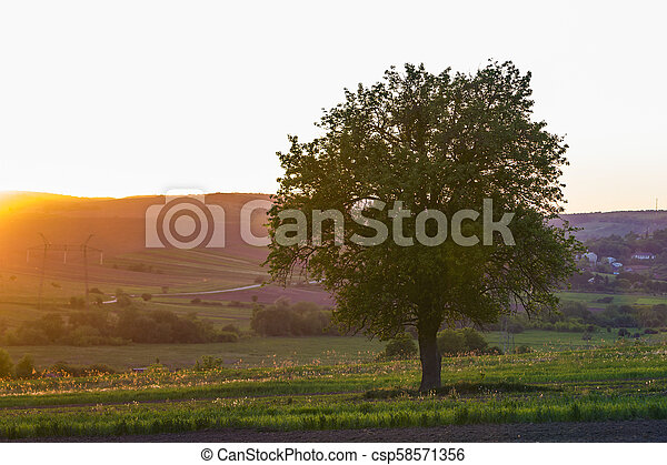 Quiet and peaceful view of beautiful big green tree at sunset growing alone in spring field on distant small village between green gardens and hills background. Beauty and harmony of nature concept. - csp58571356