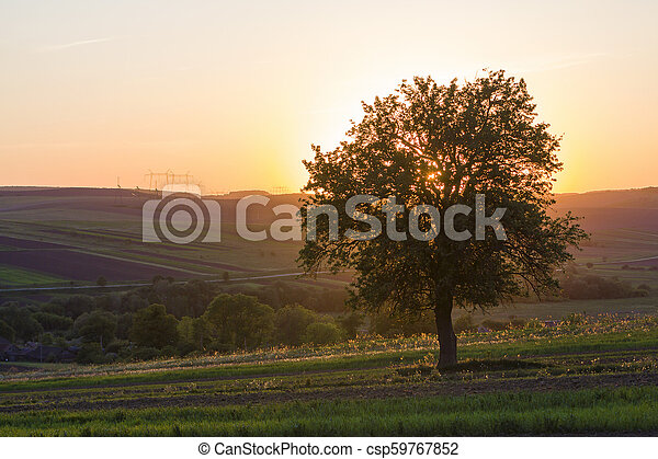 Quiet and peaceful view of beautiful big green tree at sunset growing alone in spring field on distant hills bathed in orange evening sunlight and high voltage lines stretching to horizon background. - csp59767852