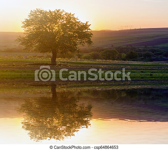 Quiet and peaceful view of beautiful big green tree at sunset growing alone in spring field on distant hills bathed in orange evening sunlight and high voltage lines stretching to horizon background. - csp64864653
