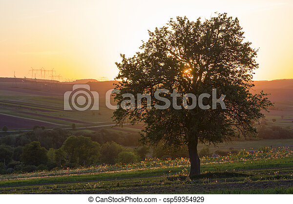 Quiet and peaceful view of beautiful big green tree at sunset growing alone in spring field on distant hills bathed in orange evening sunlight and high voltage lines stretching to horizon background. - csp59354929