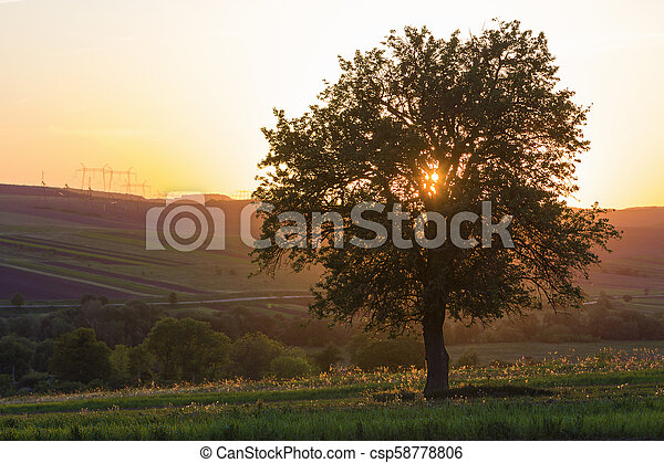 Quiet and peaceful view of beautiful big green tree at sunset growing alone in spring field on distant hills bathed in orange evening sunlight and high voltage lines stretching to horizon background. - csp58778806