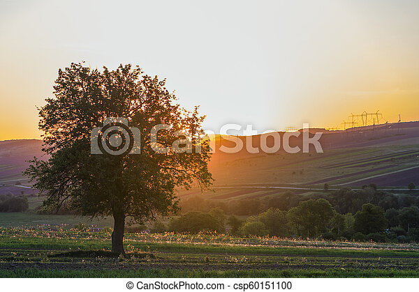 Quiet and peaceful view of beautiful big green tree at sunset growing alone in spring field on distant hills bathed in orange evening sunlight and high voltage lines stretching to horizon background. - csp60151100