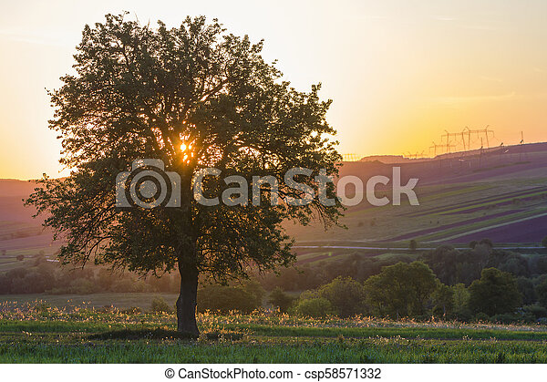 Quiet and peaceful view of beautiful big green tree at sunset growing alone in spring field on distant hills bathed in orange evening sunlight and high voltage lines stretching to horizon background. - csp58571332