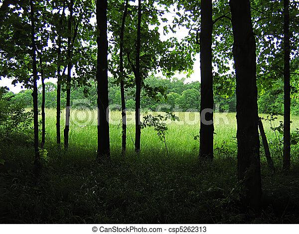 Quiet Forest - csp5262313