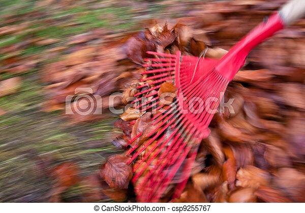 râteau, jardinage, leaves., enlever, il - csp9255767