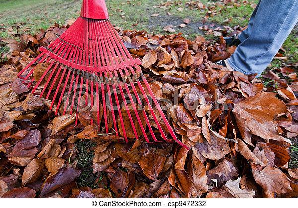 râteau, jardinage, leaves., enlever, il - csp9472332