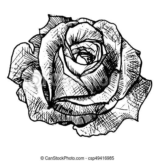 r aliste rose tatouage rose croquis art rose rose id e l gant travail graphics. Black Bedroom Furniture Sets. Home Design Ideas