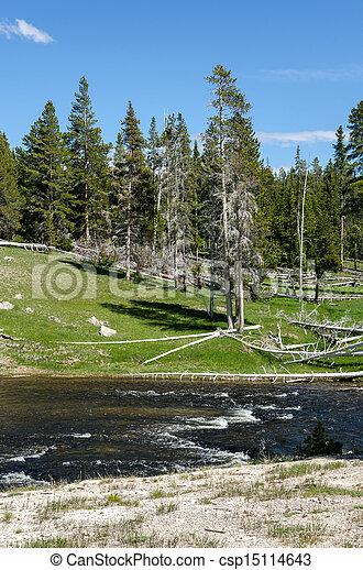 Río en Yellowstone - csp15114643