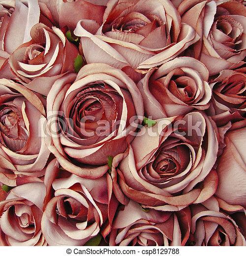 róża, beżowe tło - csp8129788