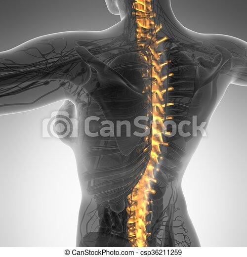 Rückenschmerzen, höher, schmerz, skelett, rückgrat,... Stock ...