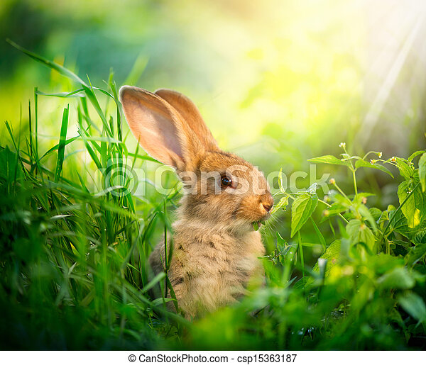 Rabbit. Art Design of Cute Little Easter Bunny in the Meadow  - csp15363187
