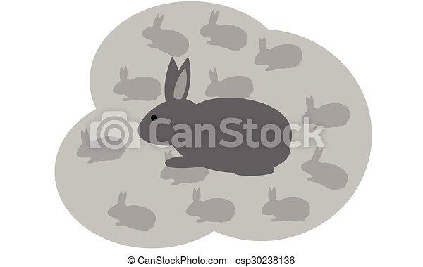 Rabbit - csp30238136