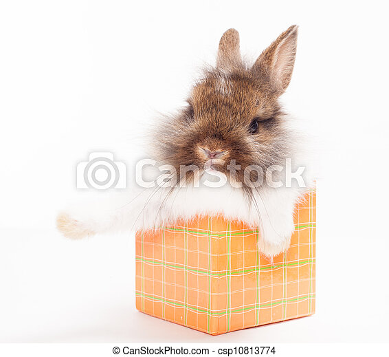 rabbit in red giftbox - csp10813774
