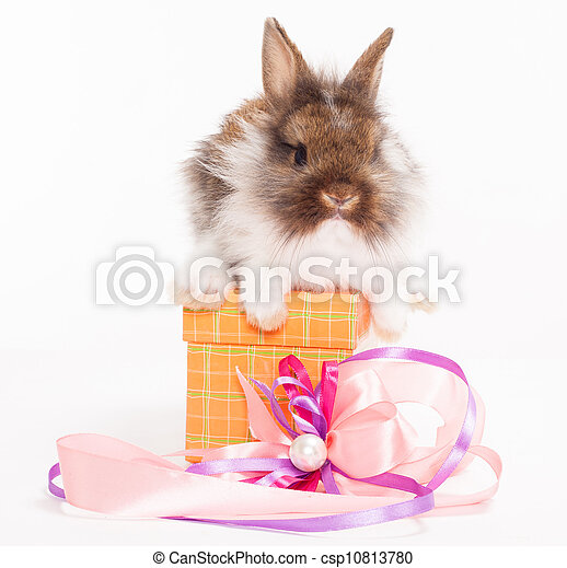 rabbit in red giftbox - csp10813780
