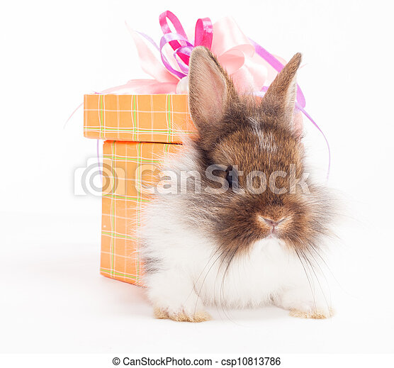rabbit in red giftbox - csp10813786