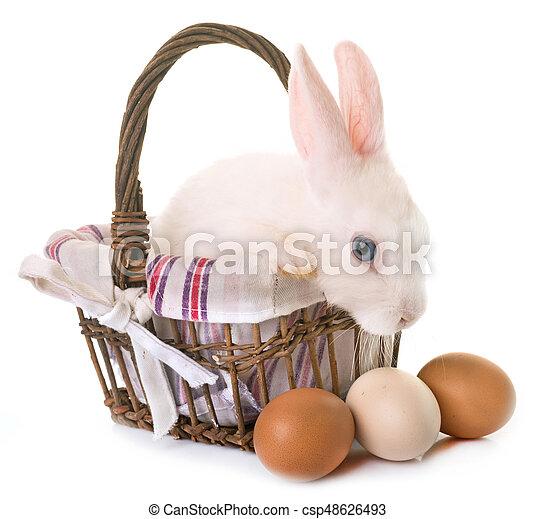 rabbit in studio - csp48626493