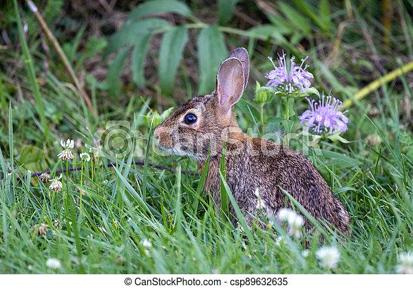 Rabbit in the Grass - csp89632635