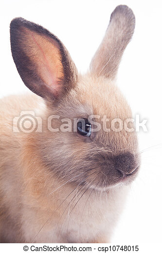 Rabbit isolated on a white background - csp10748015