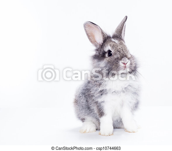Rabbit isolated on a white background - csp10744663