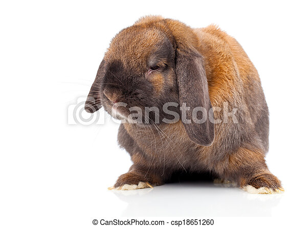 rabbit isolated on a white background - csp18651260