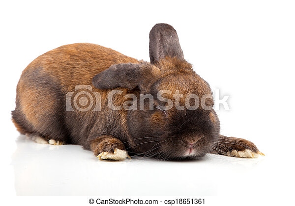 rabbit isolated on a white background - csp18651361