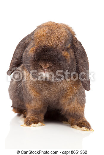 rabbit isolated on a white background - csp18651362