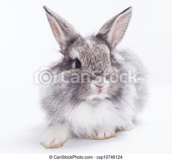 Rabbit isolated on a white background - csp10746124