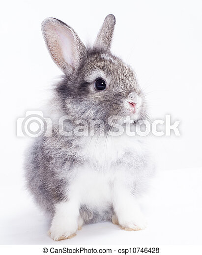 Rabbit isolated on a white background - csp10746428