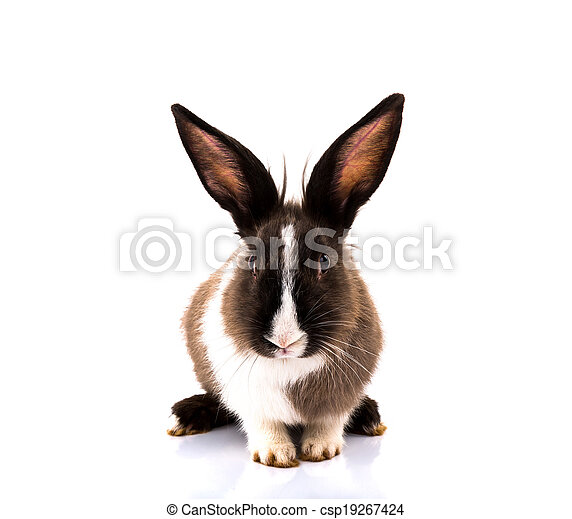 Rabbit isolated on a white background - csp19267424