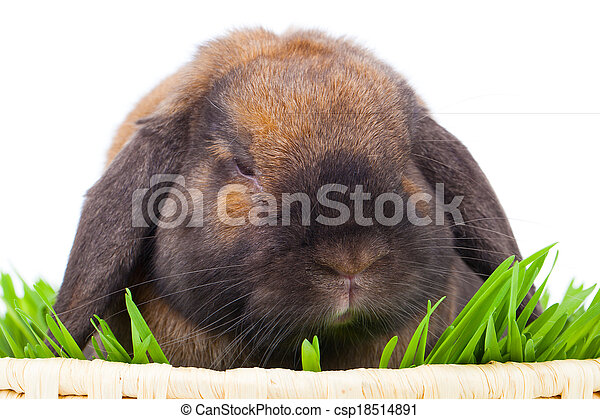rabbit isolated on a white background - csp18514891