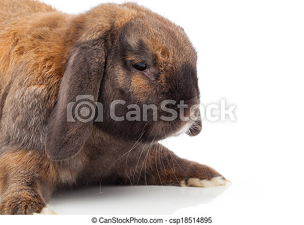 rabbit isolated on a white background - csp18514895