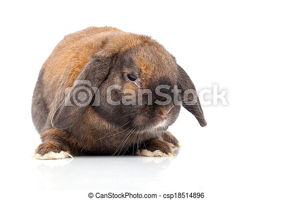 rabbit isolated on a white background - csp18514896
