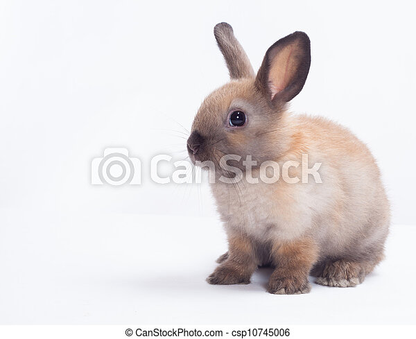 Rabbit isolated on a white background - csp10745006