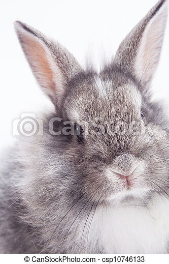 Rabbit isolated on a white background - csp10746133