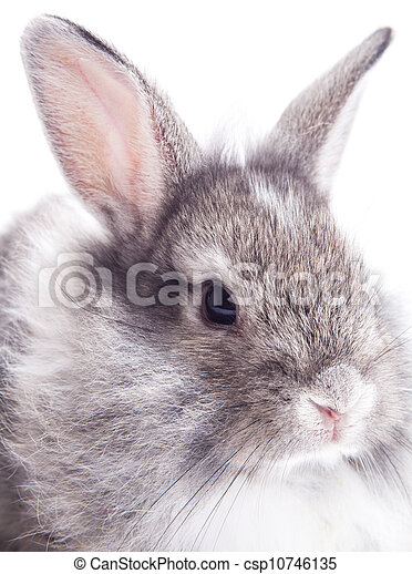 Rabbit isolated on a white background - csp10746135