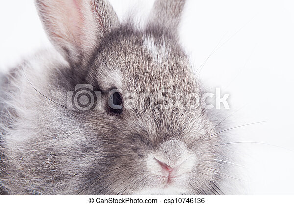 Rabbit isolated on a white background - csp10746136
