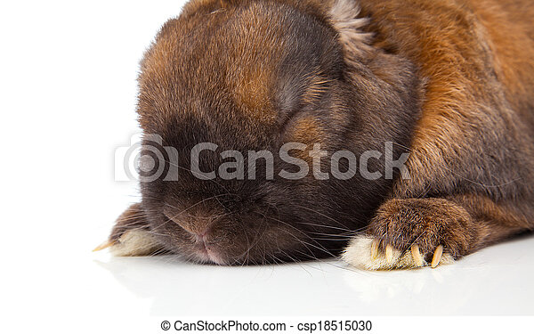 rabbit isolated on a white background - csp18515030