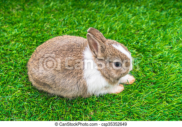 Rabbit on green grass for easter holiday - csp35352649