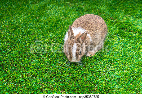 Rabbit on green grass for easter holiday - csp35352725