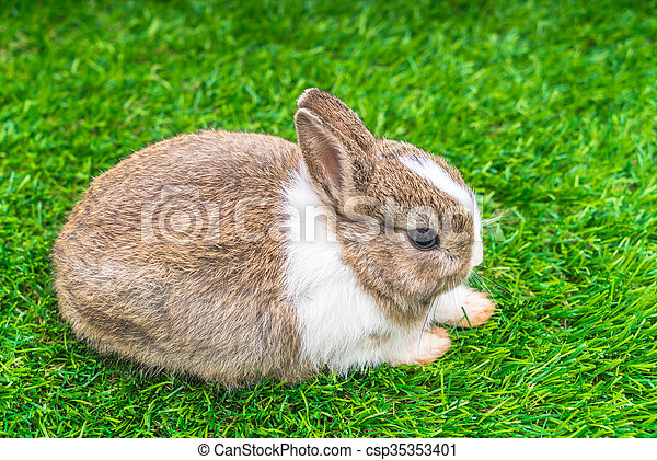 Rabbit on green grass for easter holiday - csp35353401