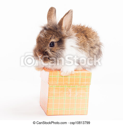 rabbit on red giftbox - csp10813799