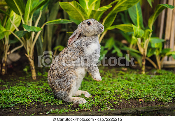 rabbit on the grass. Cosmetics test on rabbit animal. Cruelty free and stop animal abuse concept - csp72225215