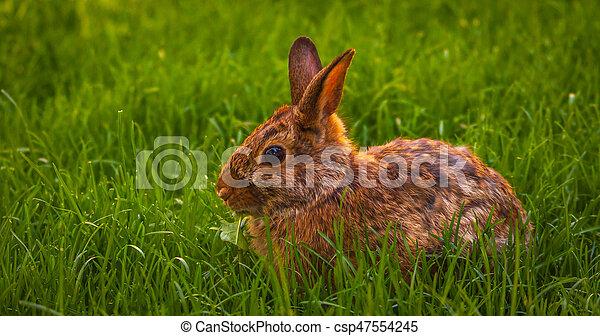 Rabbit relaxing in the grass - csp47554245