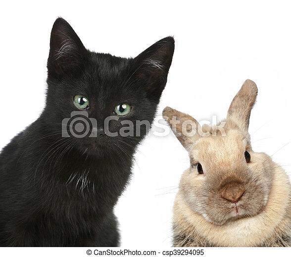 Gato negro y conejo. Retrato de cerca - csp39294095