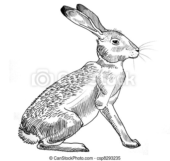 Rabbit sitting - csp8293235