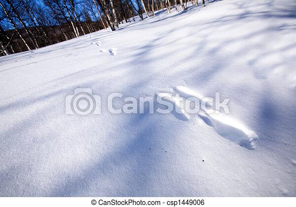 Rabbit Tracks in Snow - csp1449006