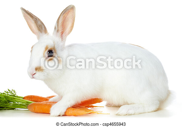 Rabbit with carrots - csp4655943