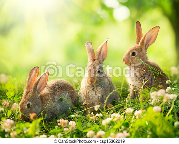 Rabbits. Art Design of Cute Little Easter Bunnies in the Meadow  - csp15362219