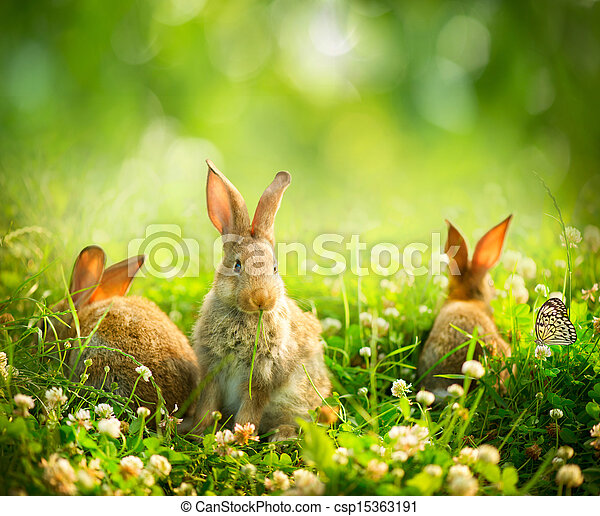 Rabbits. Art Design of Cute Little Easter Bunnies in the Meadow  - csp15363191