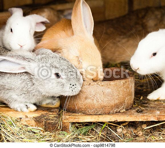 Rabbits' hutch - csp9814798
